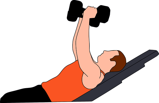 Free vector graphic: Gymnastics, Gym, Heavy, Gymnasium - Free Image on Pixabay - 2774336 (17099)