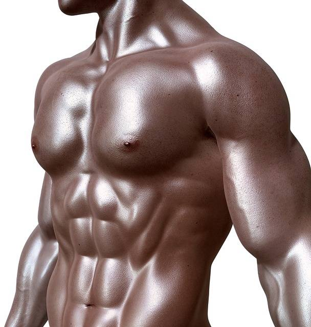 Bodybuilder Sixpack Six-Pack · Free image on Pixabay (59696)
