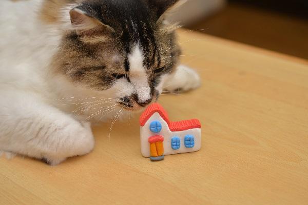 ネコと住む決断