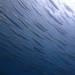 7月13日の海ログ
