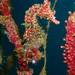 水温の変化で生物は変わる!伊豆、宇佐美、7月21日の海ログ