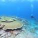 MSO那覇店のダイビングは水面ツルツルの海を満喫!