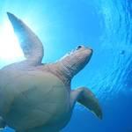 MSO那覇店のダイビングは平和になったケラマでダイビング!
