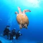 MSO那覇店のダイビングは久しぶりにポカポカ陽気でした!
