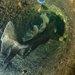 ネコザメは土管が当たりやすい