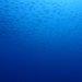 今日も青い海でした。