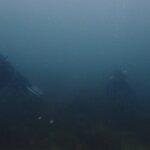薄暗い海と土管にネコザメ