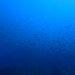 バースデーダイブは静かな海で