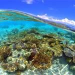 ダイビングのフィールドは、地球の7割を占める海!
