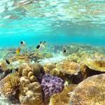 「絞り」でガラッと雰囲気が変わる水中写真