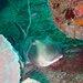 ネコザメ カメ は土管方面で、ウミウシは全体的に