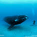 Portfolios «  Brian Skerry Photography