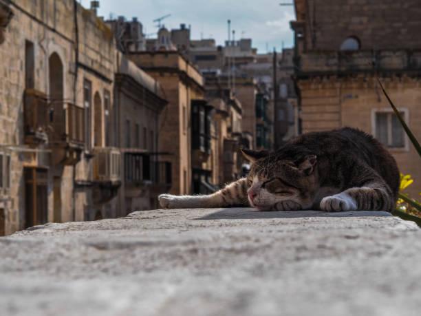 Asleep Cat in Malta