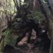 豊かな緑に覆われた世界自然遺産の島、屋久島