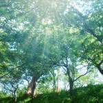 【ホルミシスの奇跡】手術不能の末期がんが完全消失!