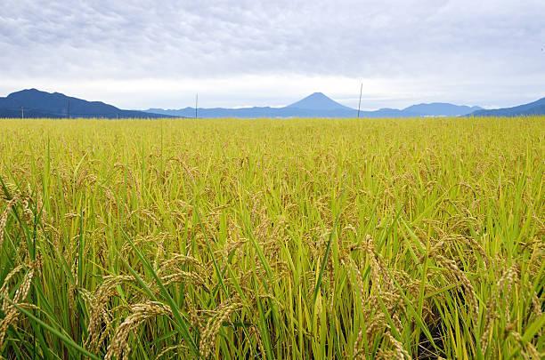 新潟といえば、お米が美味しい!