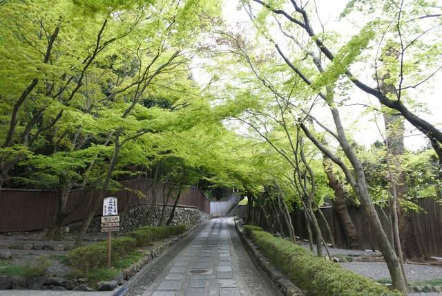 """【京都で女子旅】""""禅""""や""""パワースポット巡り""""など今話題のパワーチャージスポット3選"""