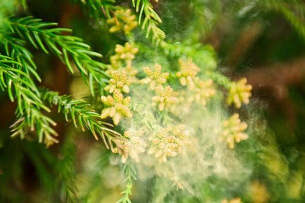 【今すぐ始められる!】花粉症を改善するために食べたほうがいい○○○って?