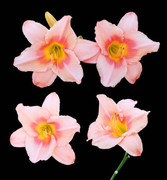 春のお花の色を連想させるコーラルピンク