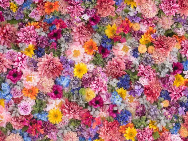 今期の花柄ブームはここが違うみたい。