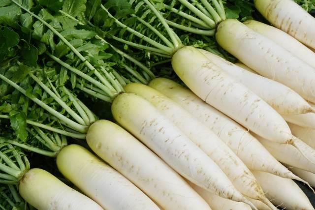 【連載コラム】連日の飲み会で疲れた胃の調子を整える!冬野菜〜大根編
