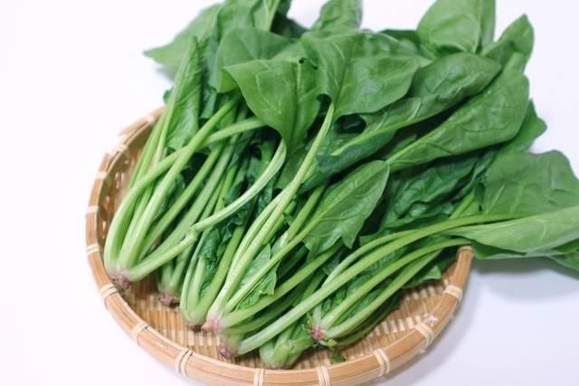 【連載コラム】栄養素をふんだんに含んだ緑黄色野菜の王様!冬野菜〜ほうれん草編