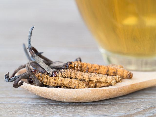強壮効果のある漢方、冬虫夏草とは?効果効能を解説
