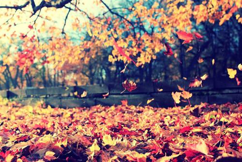 秋 日焼け対策