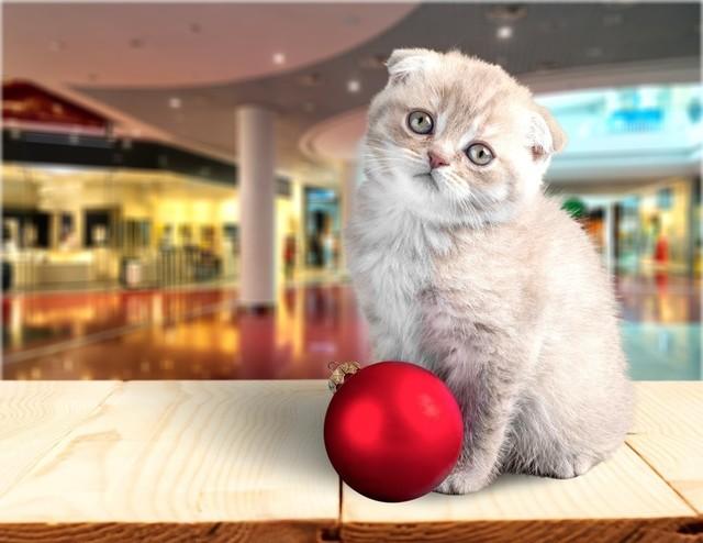 癒しの猫カフェ♡甘口デートにもおすすめ
