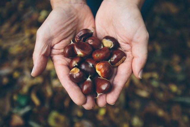 秋の味覚を楽しむ!気軽に行ける、超お得な味覚狩りツアー【関東編】