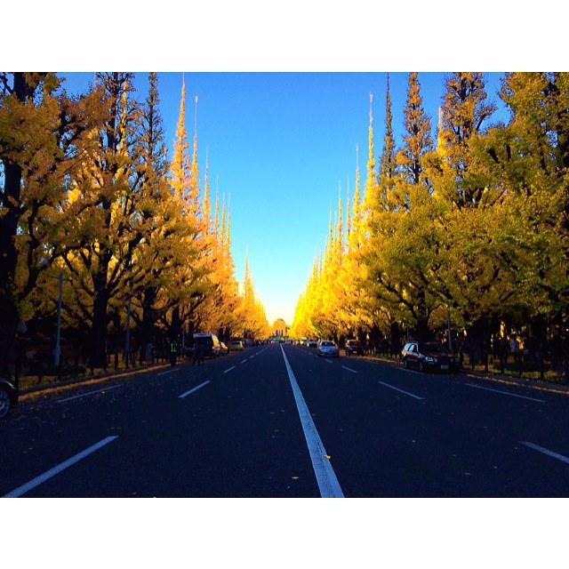 秋を感じて癒やされよう。都内の紅葉名所4選