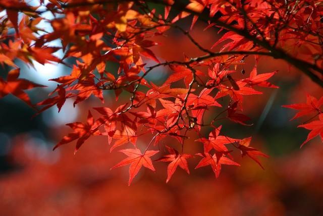 秋の紅葉デートに♡明治神宮だけじゃない都内の感動紅葉名所