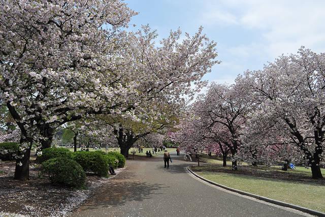 新宿御苑デートの楽しみ方|四季折々の景色とお花を大切な人と一緒に