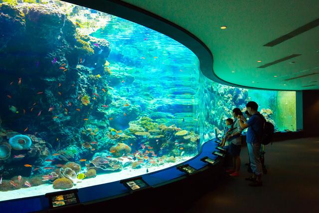 沖縄美ら海水族館 サンゴの海