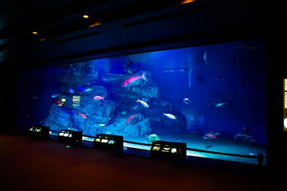 沖縄美ら海水族館 深海の海