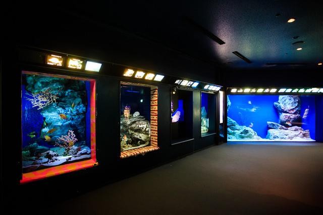 沖縄美ら海水族館 深海の旅
