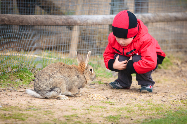 動物園 デート 子どもとウサギ