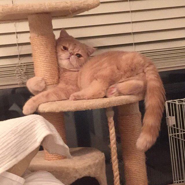 猫のマッシュくん
