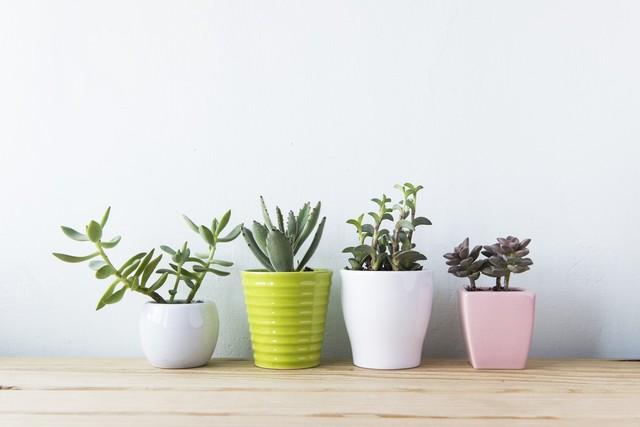 モテファッション/観葉植物を飾る