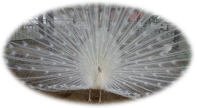動物園デート 弥生いこいの広場