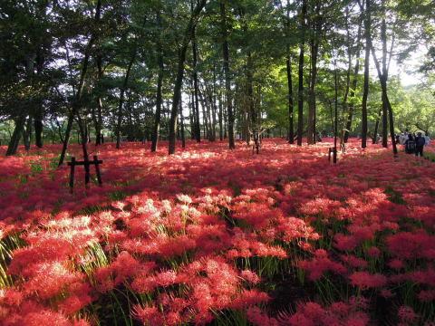 ひだか巾着田の秋の風景