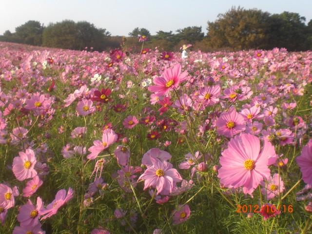 海の中道海浜公園 花の丘
