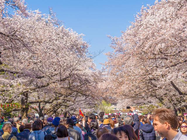 上野 観光スポット 上野公園 桜通り