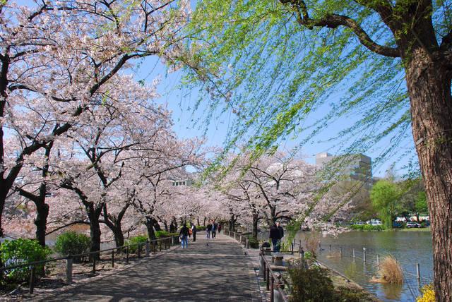 上野 観光スポット 不忍池