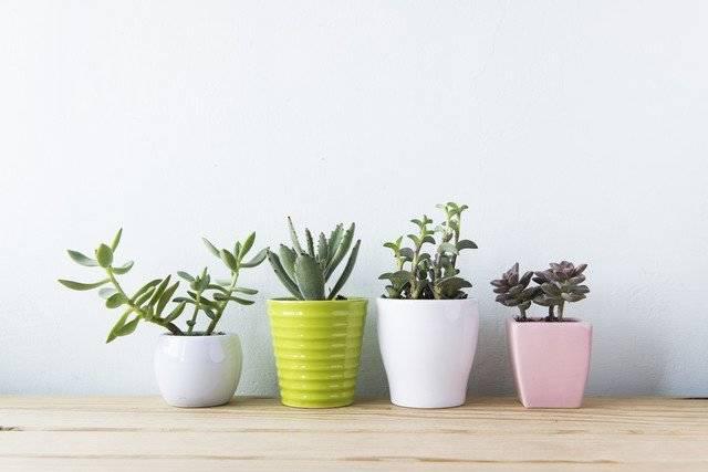 男ウケ/部屋/観葉植物