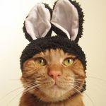 ガチャポンメーカー『奇譚クラブ(キタンクラブ)』の猫ちゃんシリーズを新発売まで一挙紹介!キャンペーンも♪