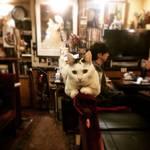 かわいい看板猫のいるカフェで癒されたい!フォトジェニックにもおススメな東京癒しカフェ5選♪