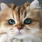 インスタで「いいね!」30,000件以上のフォトジェニックなかわいい猫写真40選!