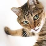 インスタグラムで是非ともフォローしたい!人気の猫ちゃんアカウント10選!