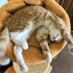 【東京】癒されたい!リラックスできて可愛い猫ちゃん達がいる猫カフェの場所